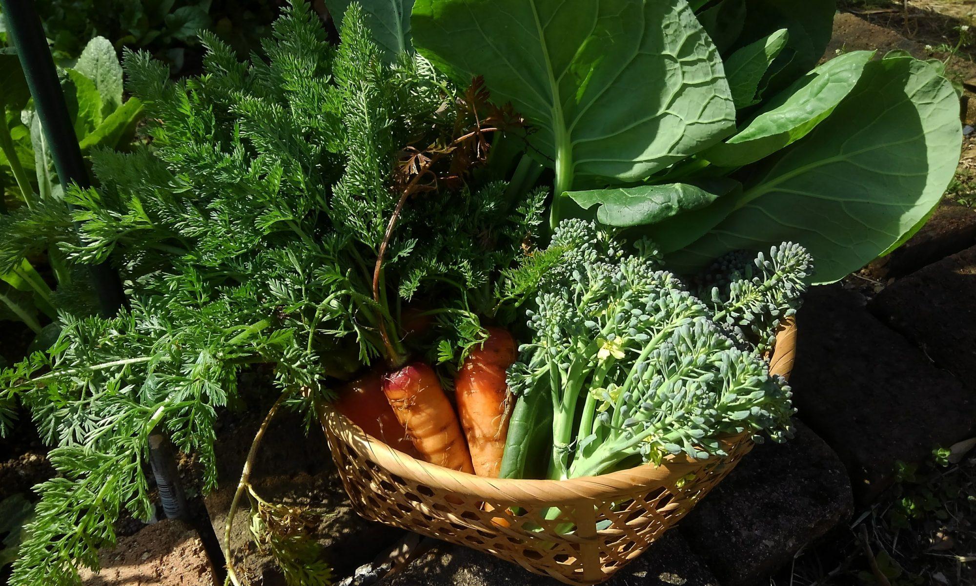 消費から循環へ〜パーマカルチャー、食べられる庭、手作り…